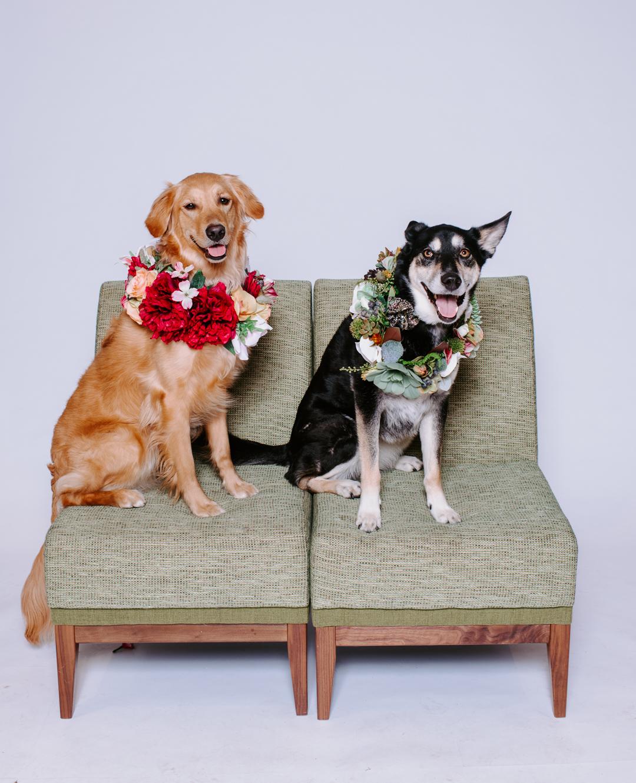 TerraSuraPhotography-DogsofRosedale-Web-8474.jpg