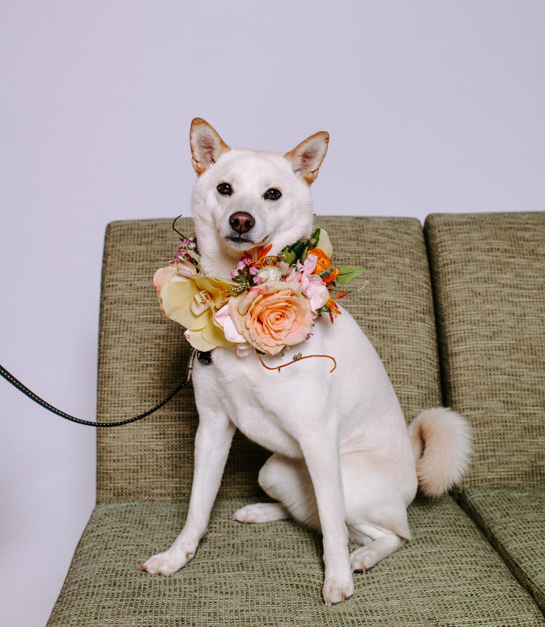 TerraSuraPhotography-DogsofRosedale-Web-8797.jpg