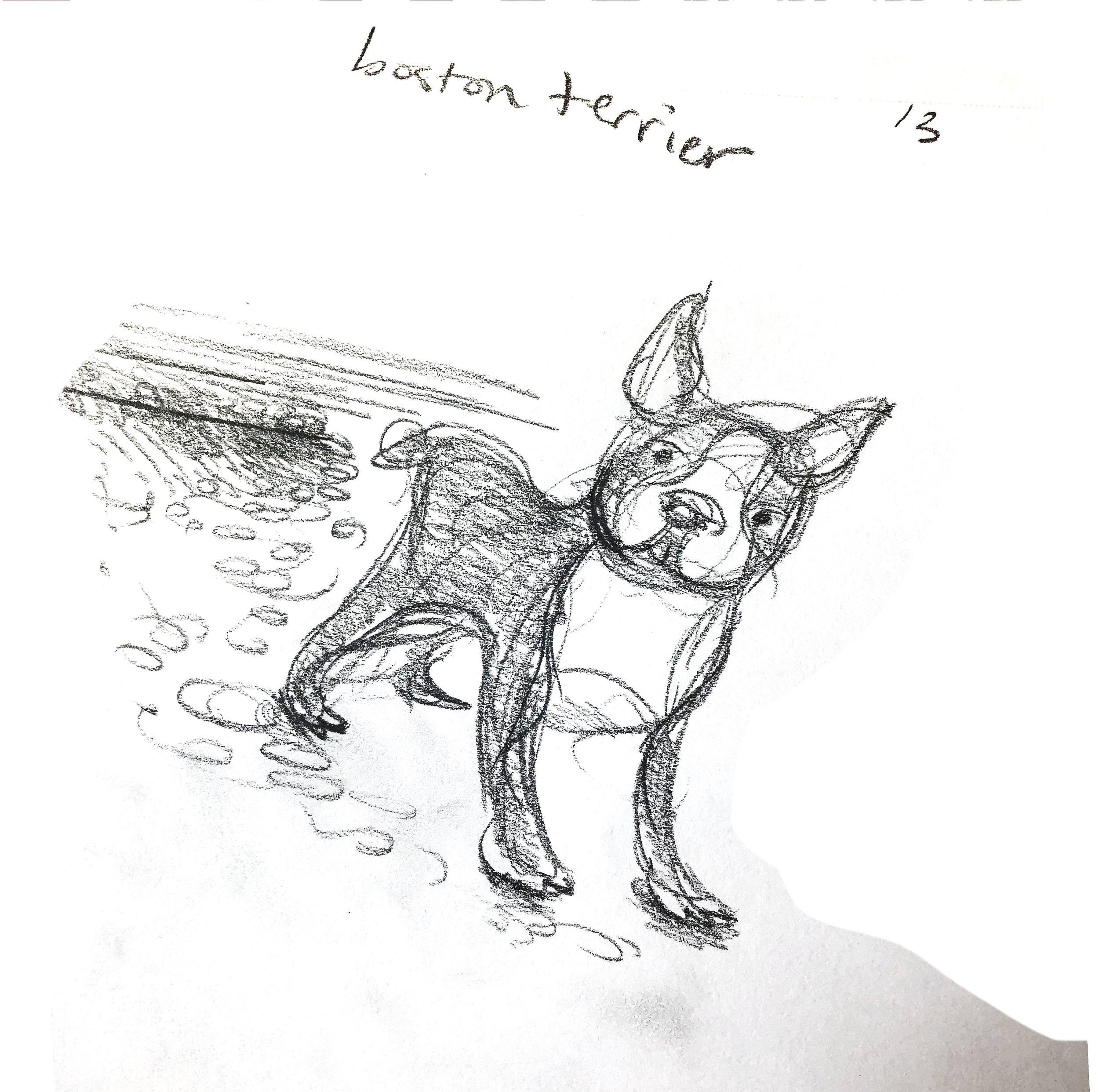 13 boston terrier.jpg