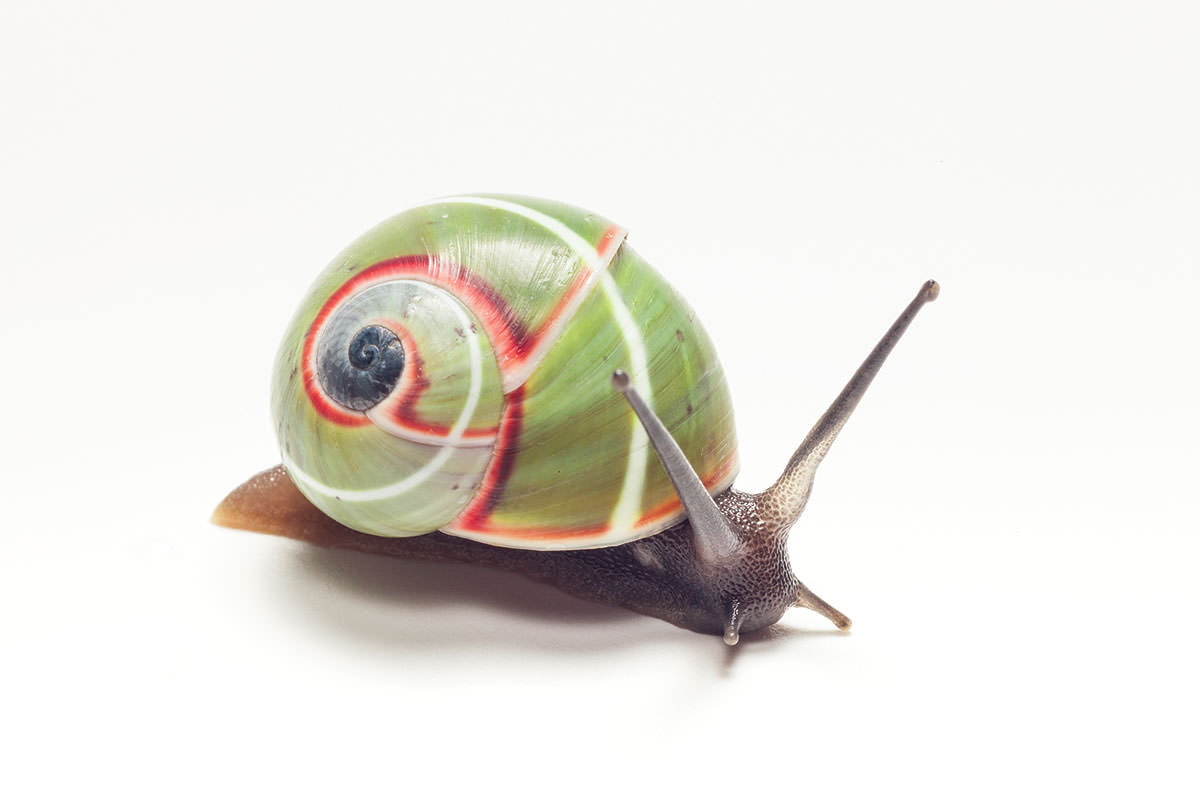 Snails are cute, but I don't want their slime on my skin.
