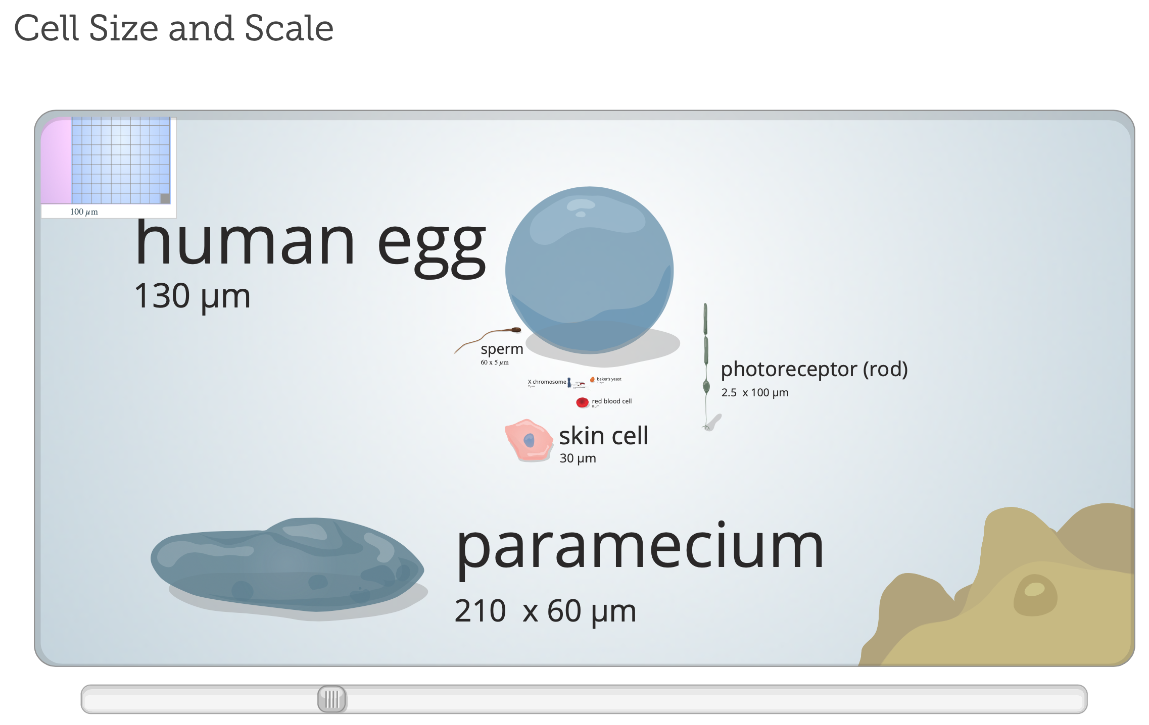 I can't stop studying this chat. I swear, I'm fascinated by the size of various molecules and organisms!