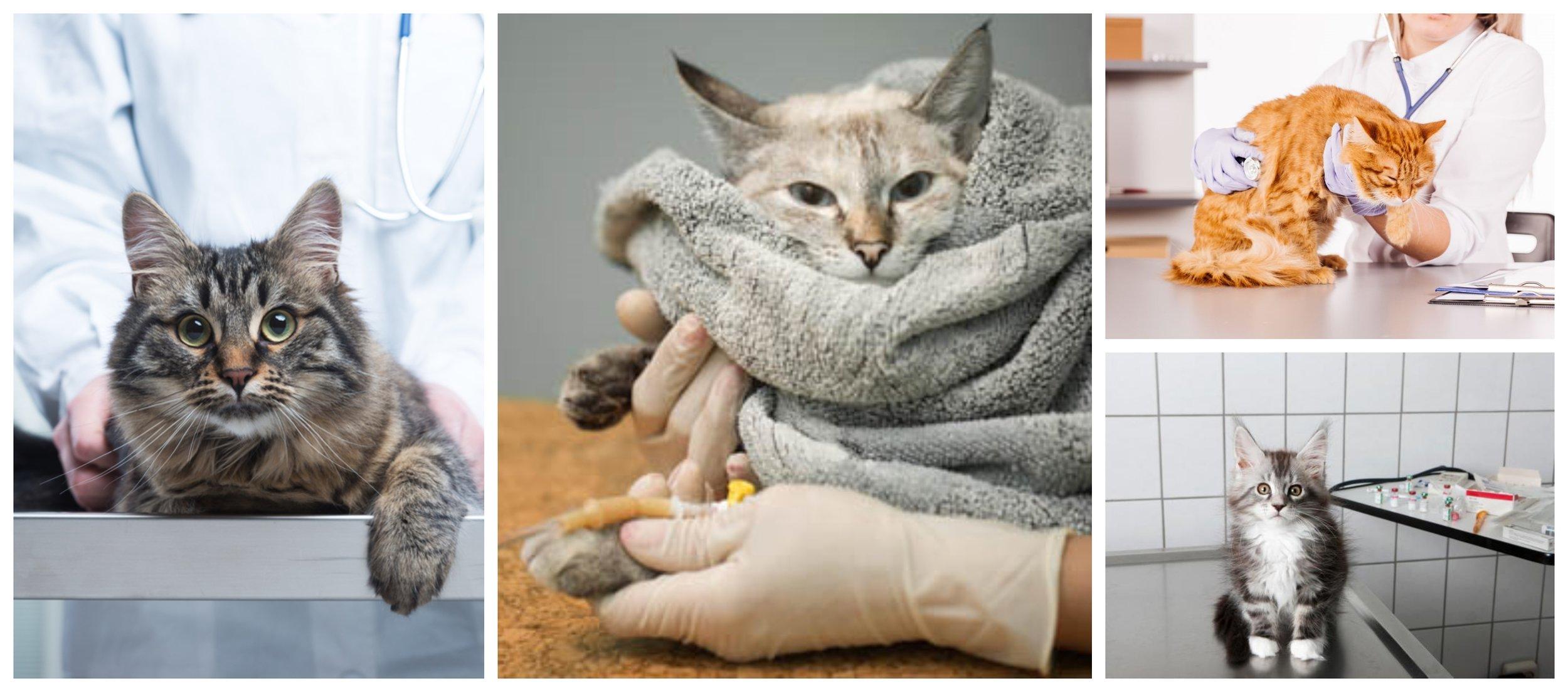 Catsick collage.jpg