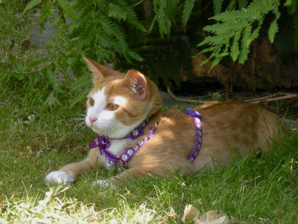 cat on harness 2.jpg