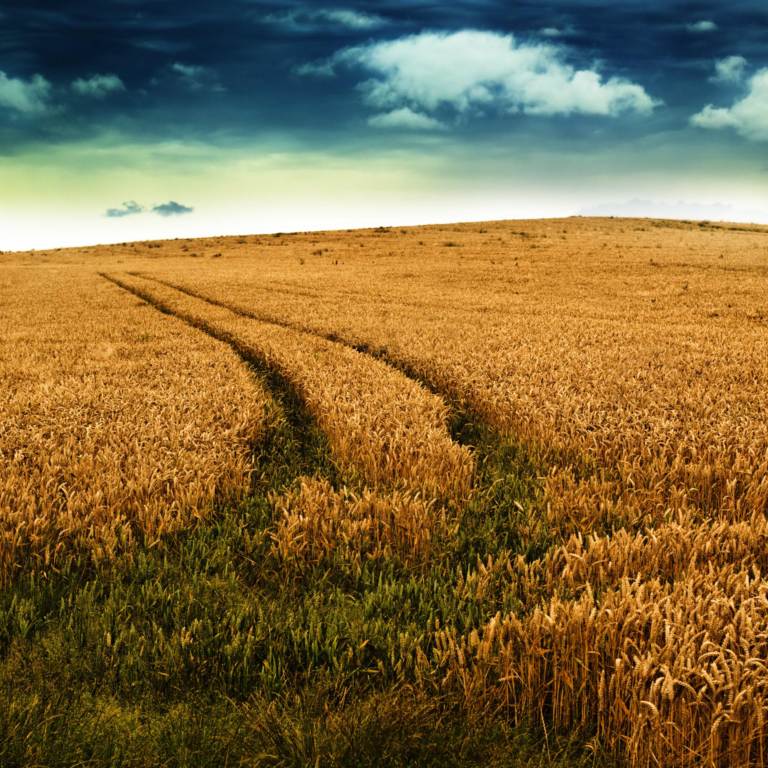 Field_Path.jpg