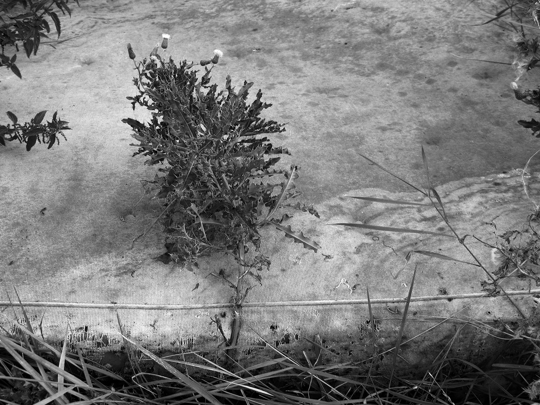 12 - Riverbed Stories.jpg