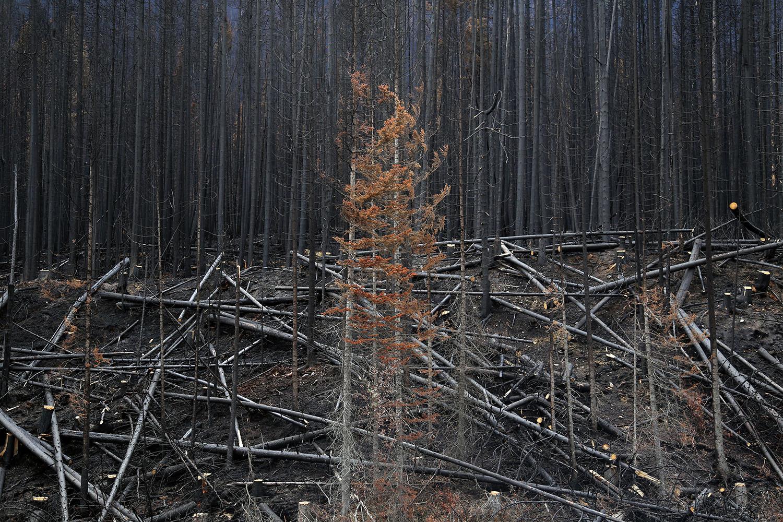 The Skeletel Forest_04.jpg