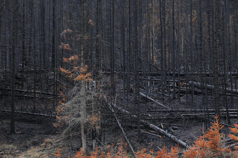 The Skeletel Forest_05.jpg