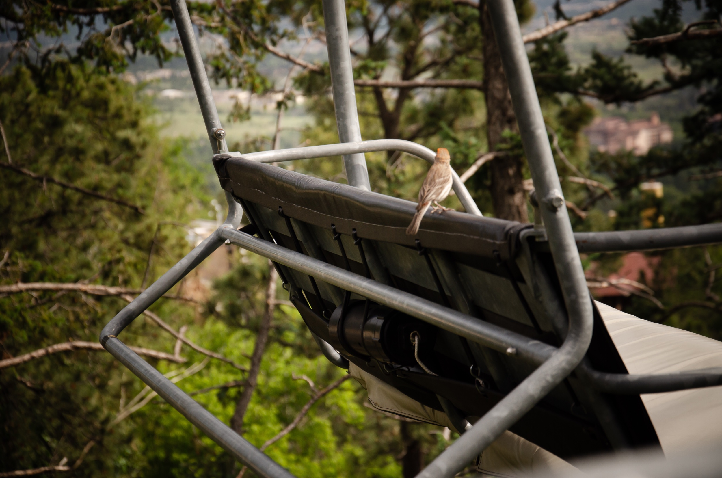 This bird was riding the lift down as we were riding up.