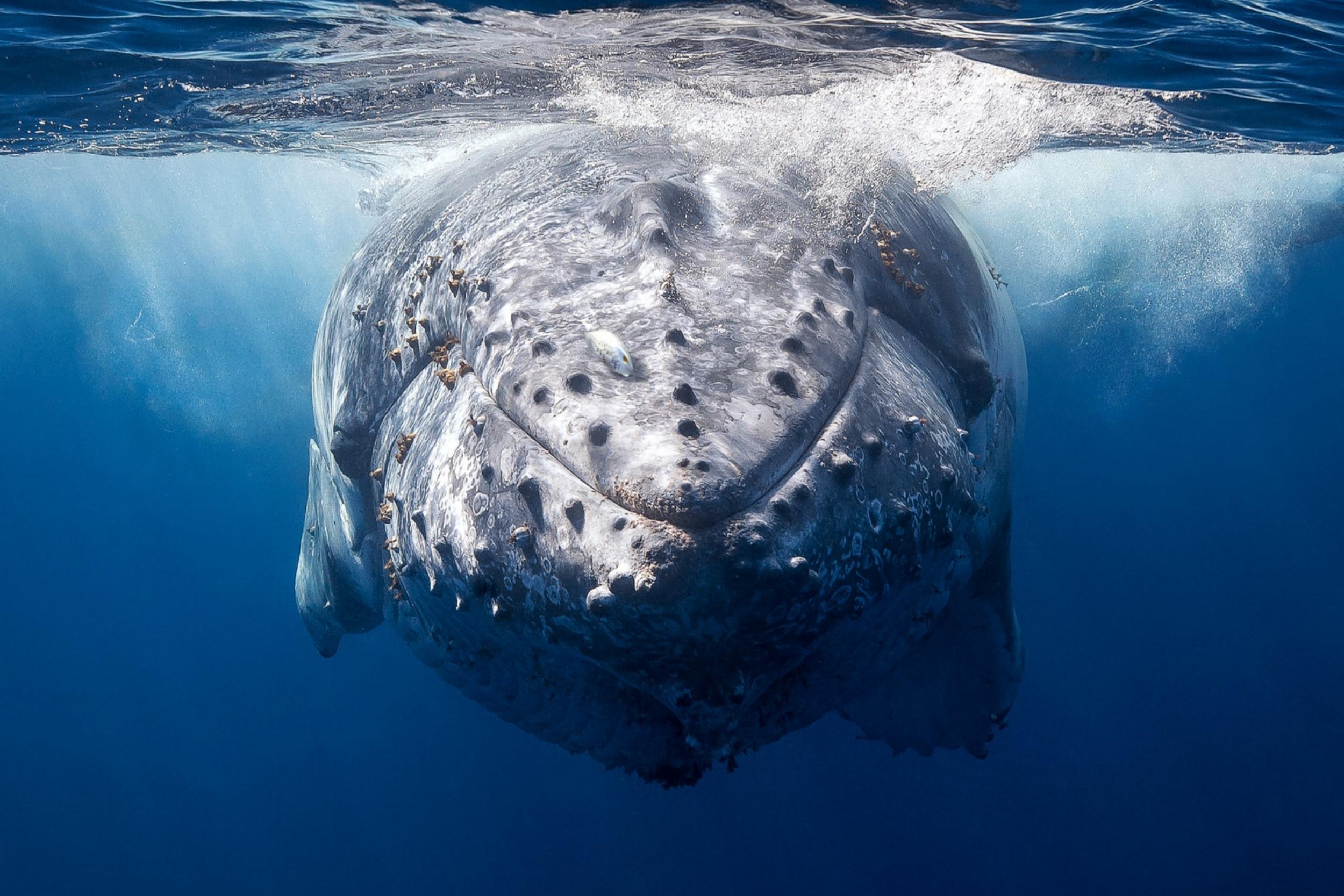 Whale_Photo1_draft_graded.jpg