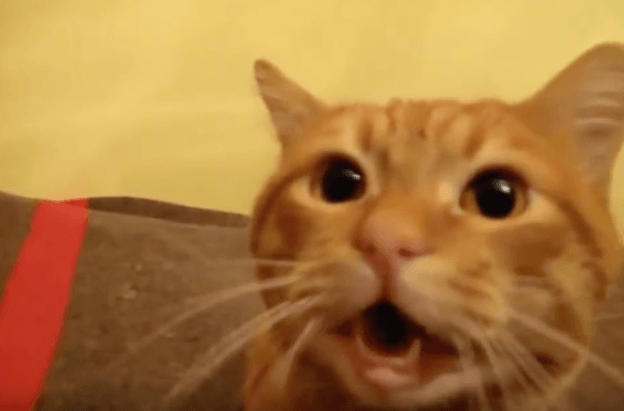 Cats-Meeting-Their-Humans-After-A-Long-Time-So-Precious-VIDEO.png