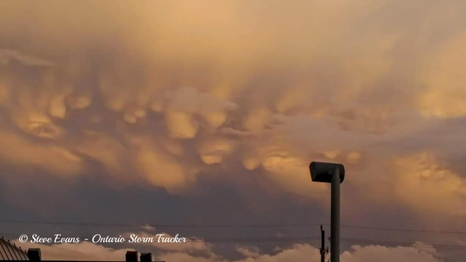What Are Mammatus Clouds?   Share  |  Mammatus are pouch-like cloud structures. They're also a rare example of clouds in sinking air-- most clouds form in rising air. Although mammatus most frequently form on the underside of a cumulonimbus, they can develop underneath cirrocumulus, altostratus, altocumulus and stratocumulus.  For a mammatus to form, the sinking air must be cooler than the air around it and have high liquid water or ice content. They derive their name from their appearance, like the bag-like sacs that hang beneath the cloud resemble cow's udders.  Mammatus are long-lived if the sinking air contains large drops and snow crystals since larger particles require greater amounts of energy for evaporation to occur. Over time, the cloud droplets do eventually evaporate and the mammatus dissolve.  Despite popular misconception, mammatus clouds are not a sign that a tornado is about to form. While associated with thunderstorms, mammatus clouds are not necessarily an indicator of severe weather. Mammatus result from the sinking of moist air into dry air. They are in essence upside-down clouds. The sharp boundary of mammatus is much like the sharp boundary of a rising cumulonimbus cloud before an anvil has formed.    Source:  NOAA    https://www.accuweather.com/en/weather-glossary/what-are-mammatus-clouds/5506130