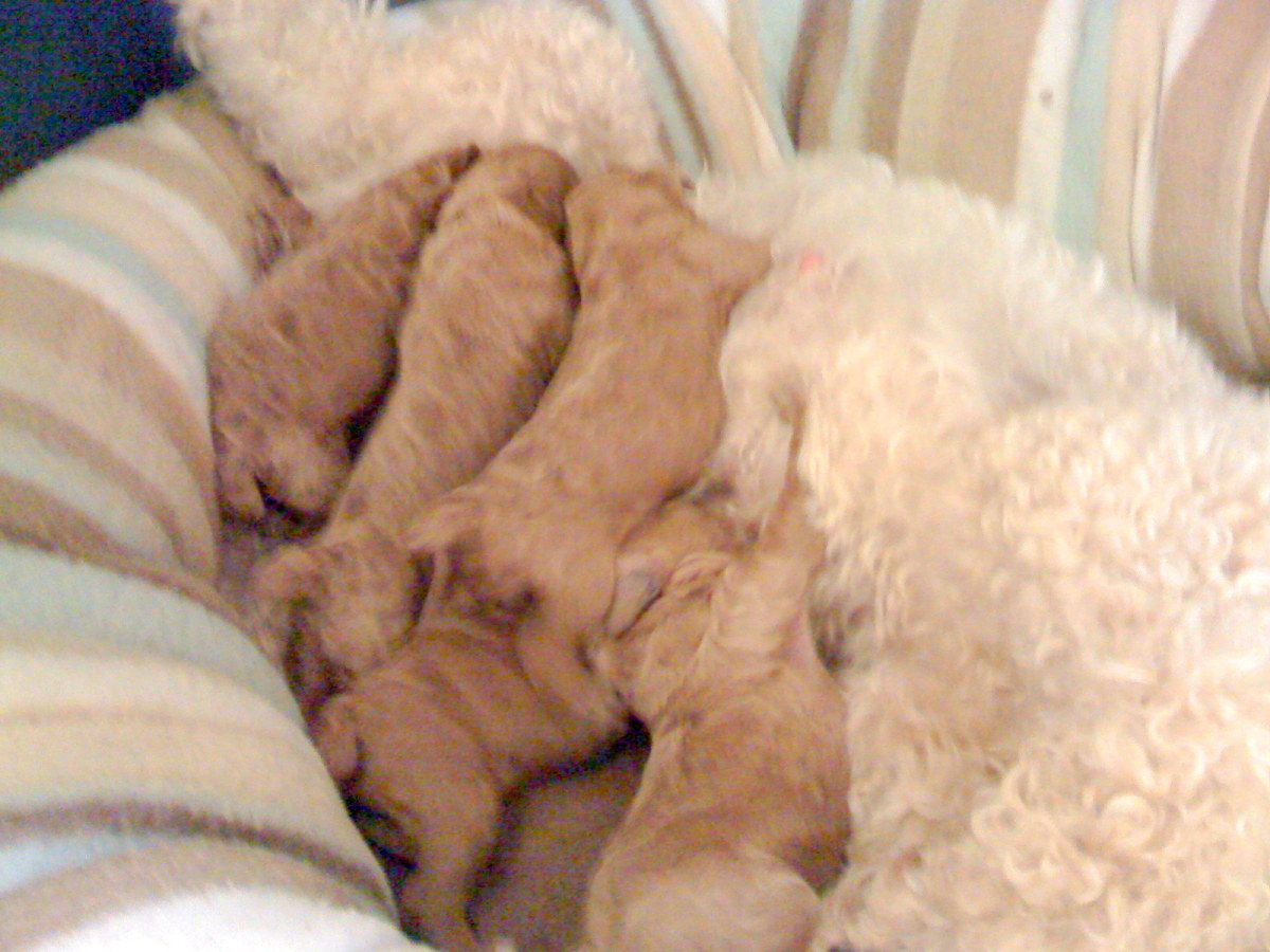 Puppies 3 Days Old - Nothing like Learning to Share