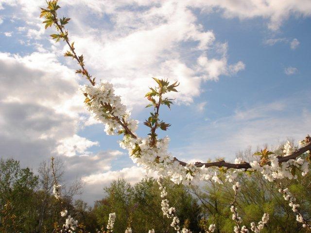Springtime, Uzes