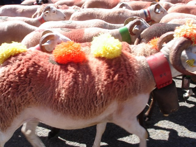 Sheep going to Market