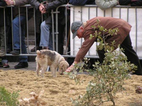 Truffle Hunting in Uzes