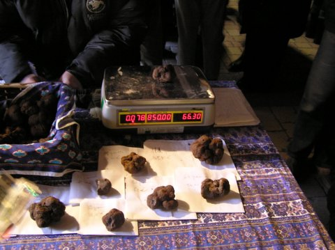 Truffles @ 100 Euro a Kilo