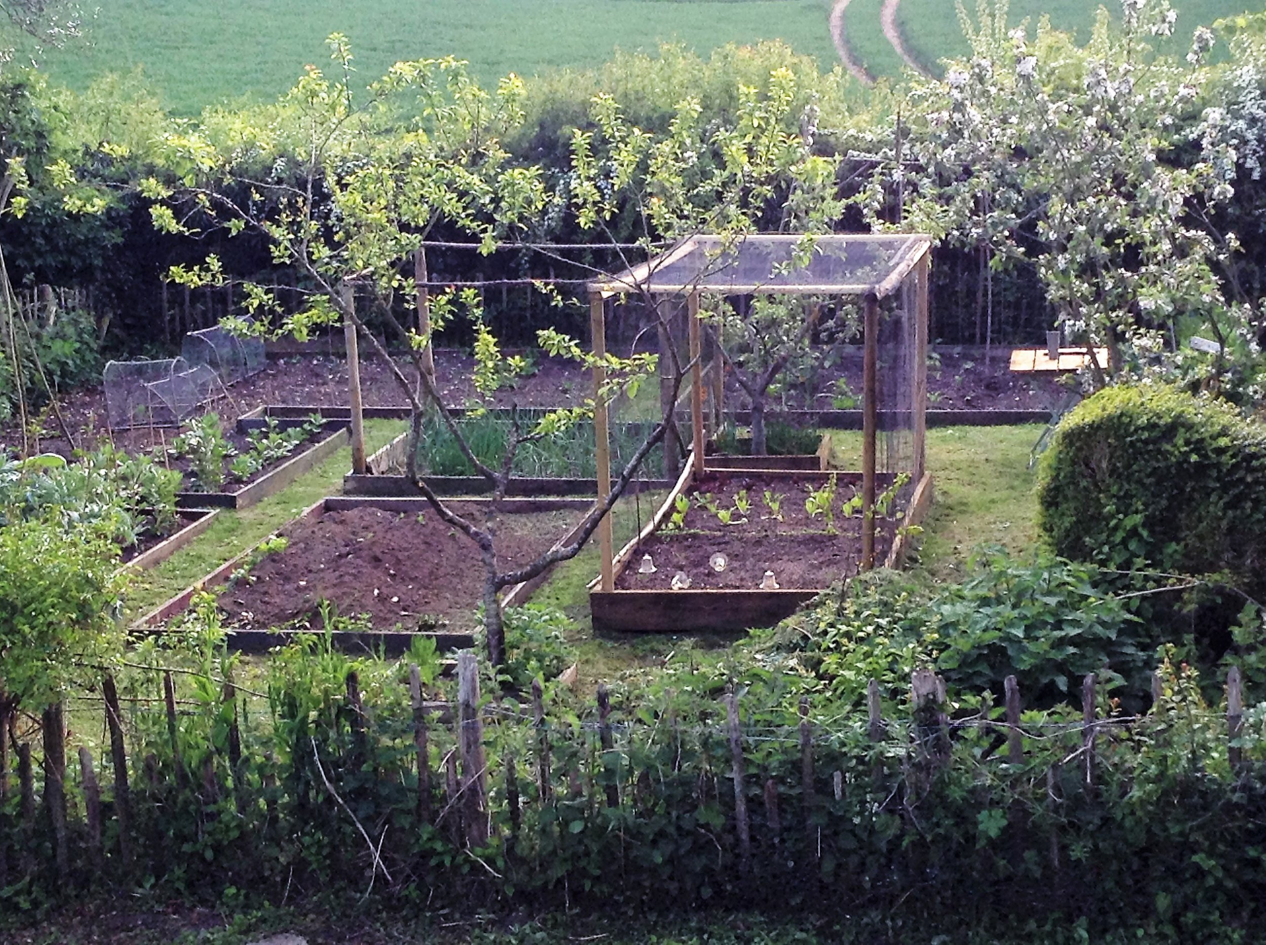 grow-your-own-veg.JPG