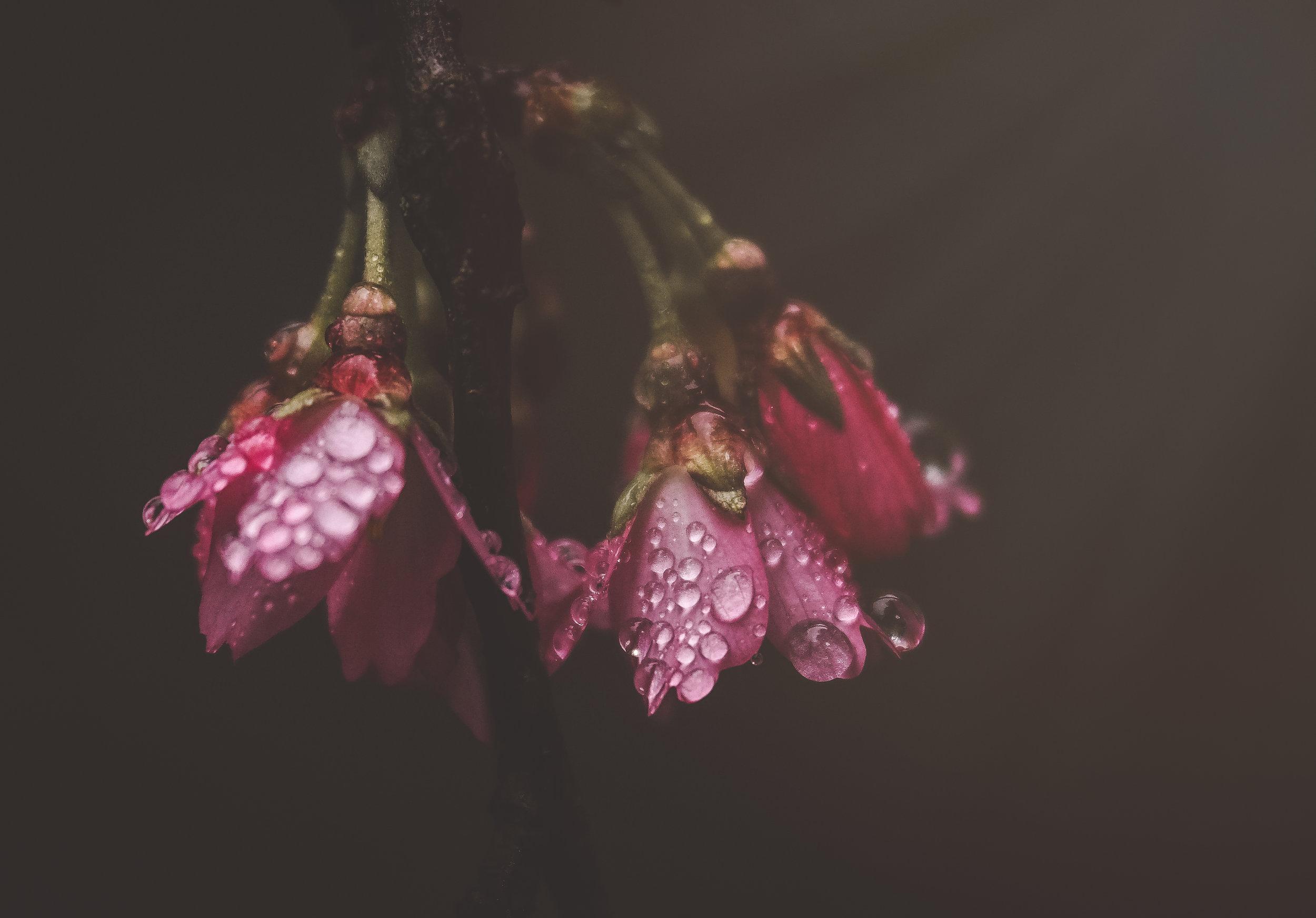 spring flowers3 (1 of 1).jpg