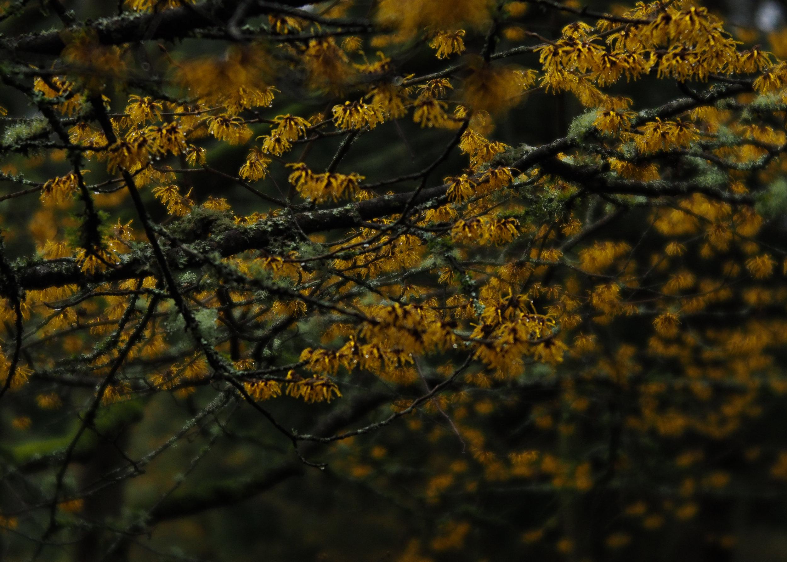 spring flowers2 (1 of 1).jpg