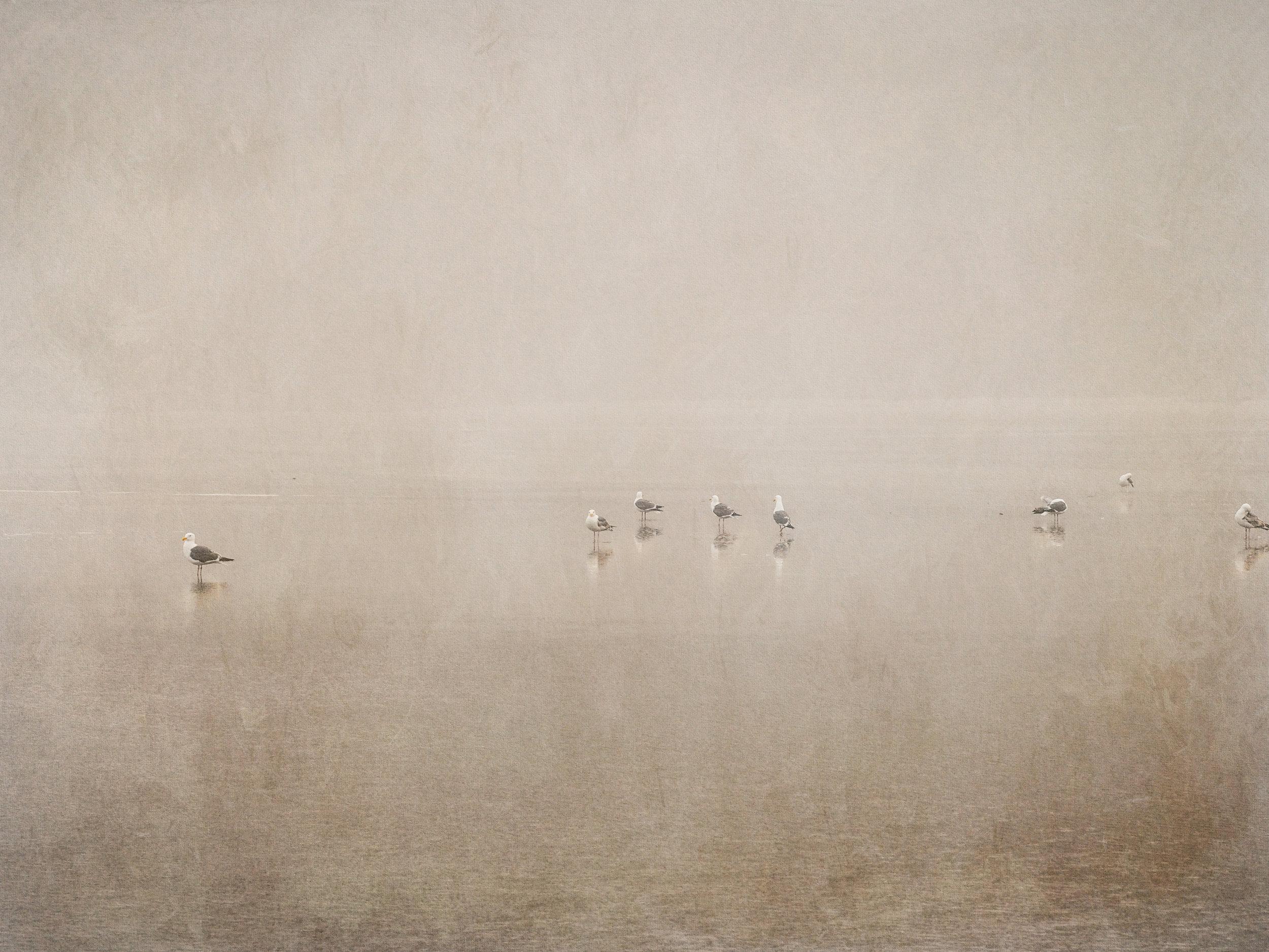Gulls, Cannon Beach, OR