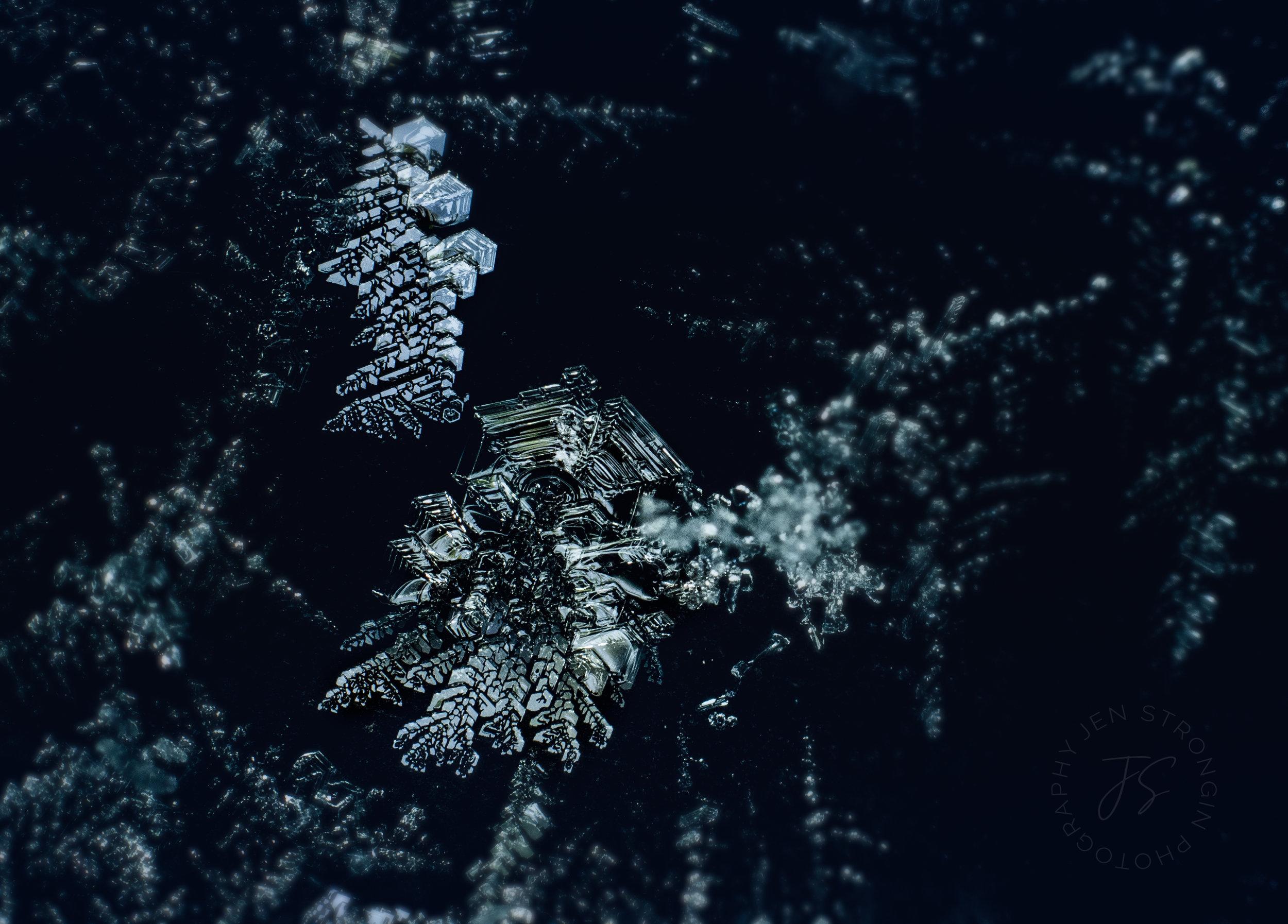 snowblog2.jpg