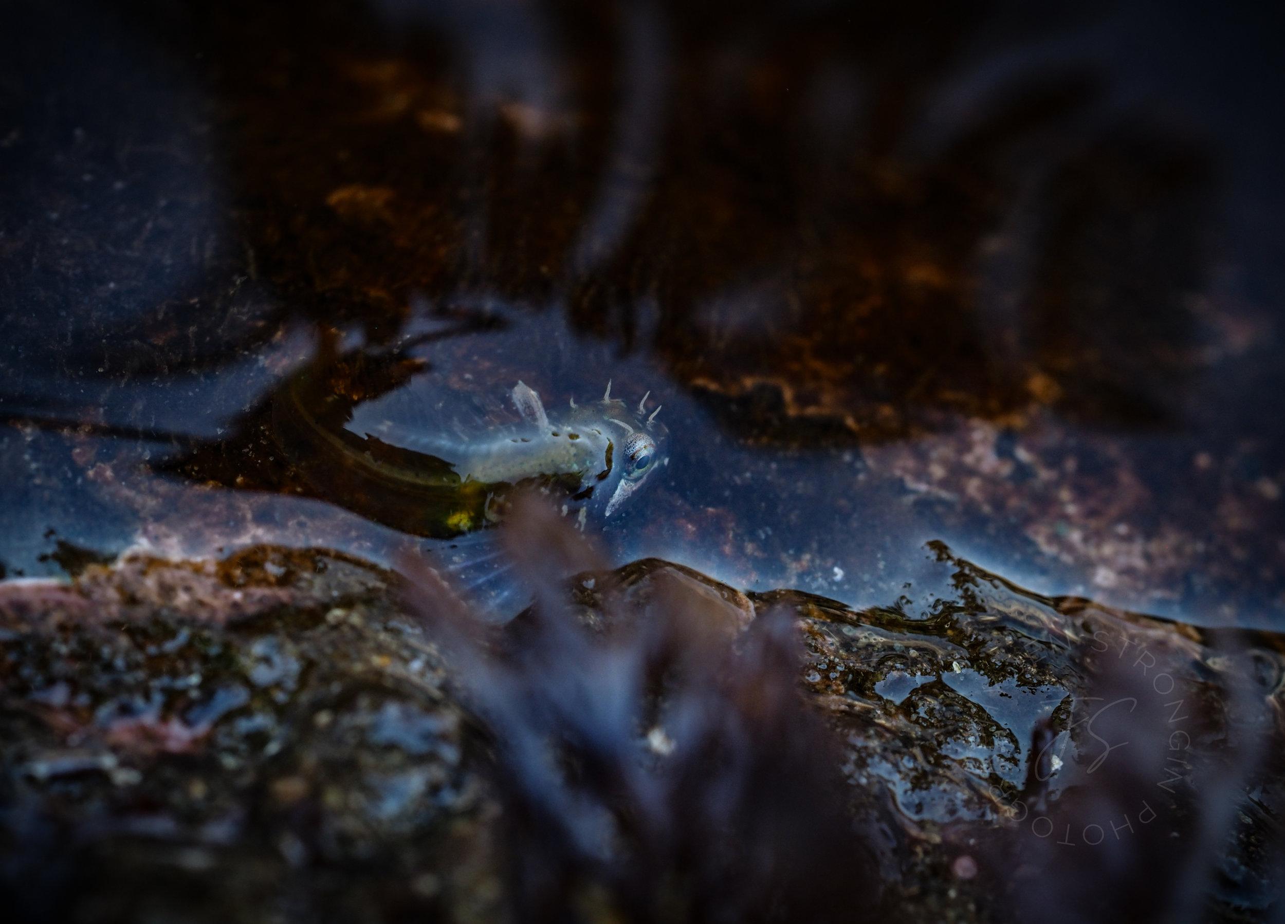 baby fish.jpg