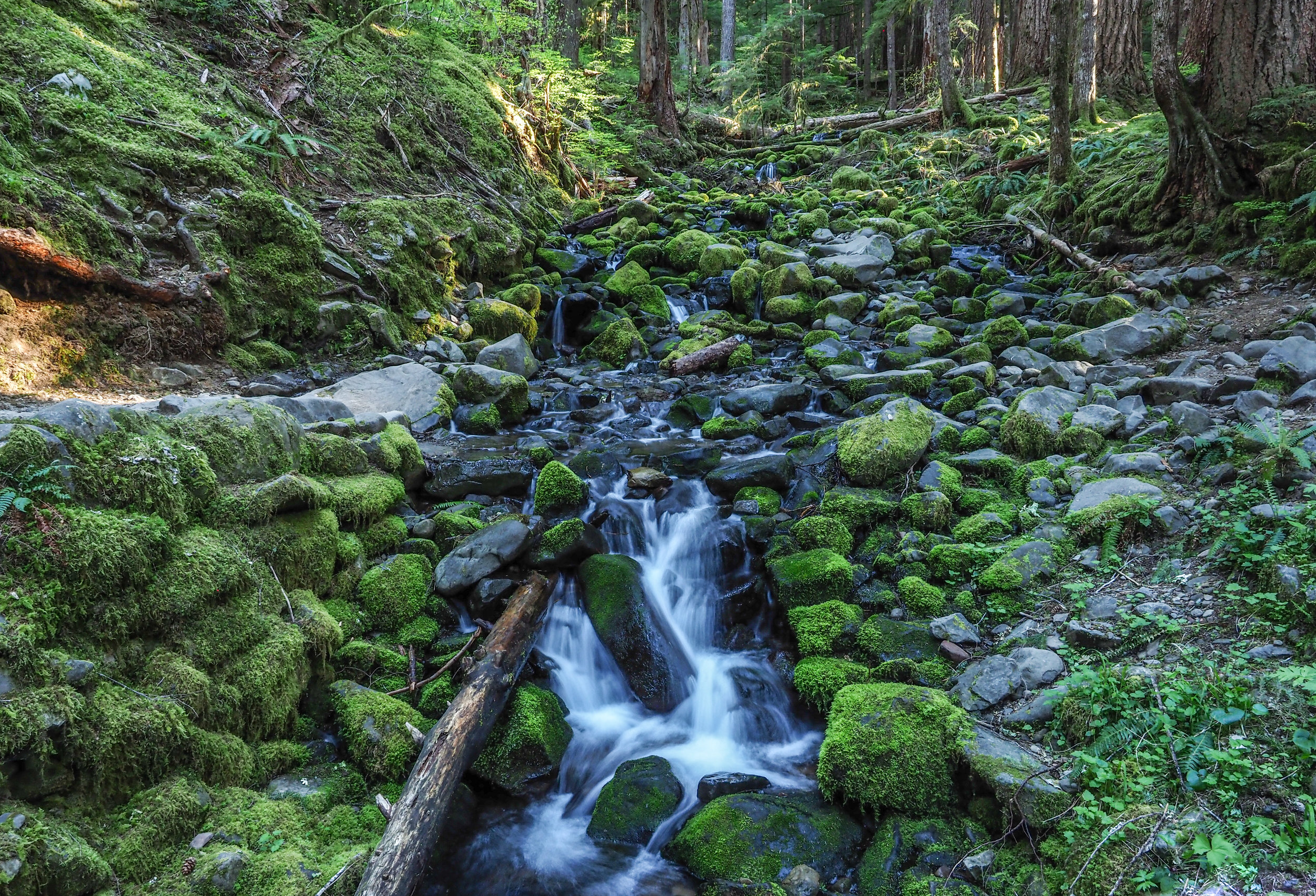 On the trail in the early am to Sol Duc Falls