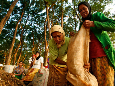 Photo credit: World Rainforest Movement