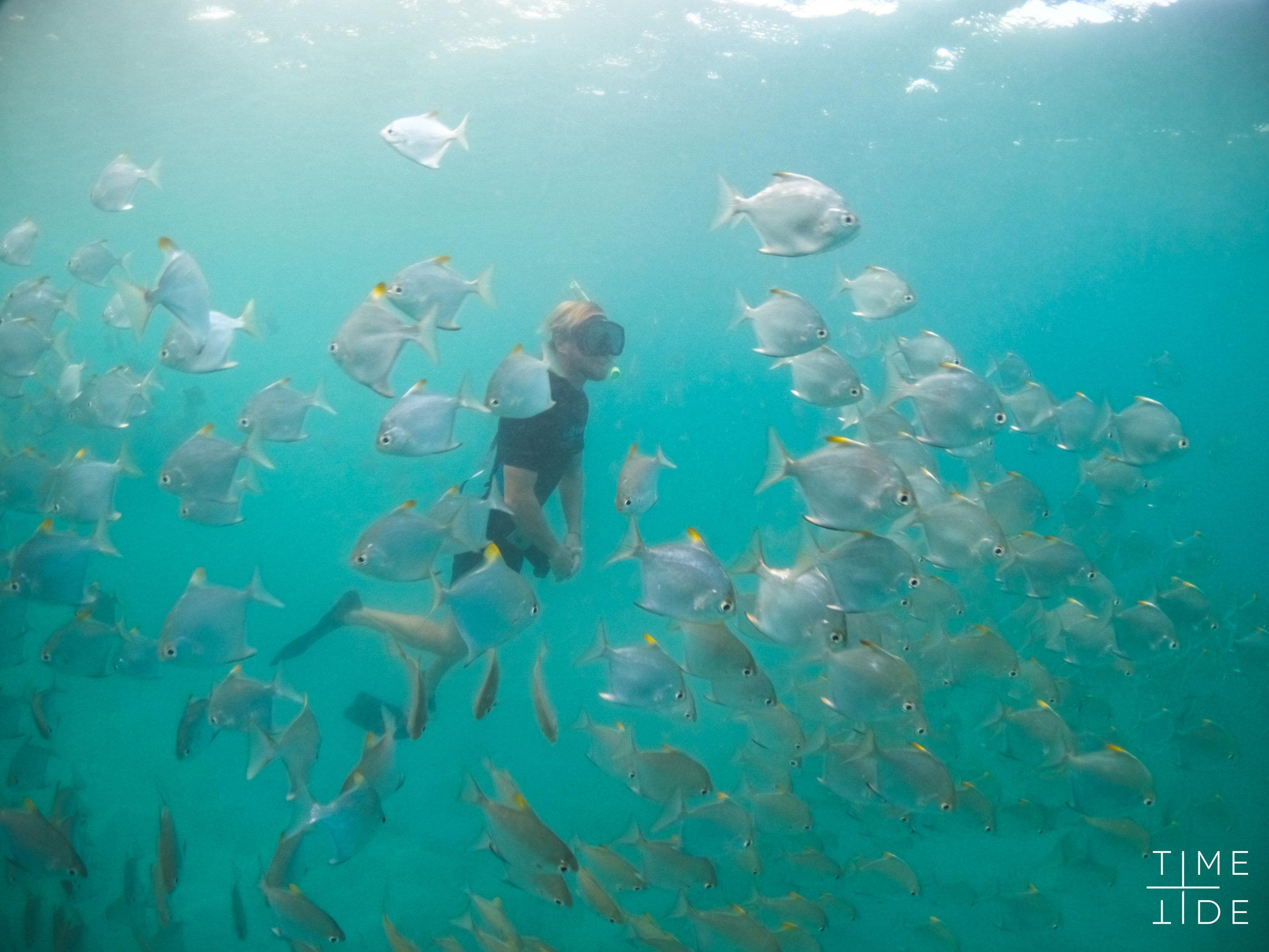 Time + Tide Miavana Diving 4.jpg