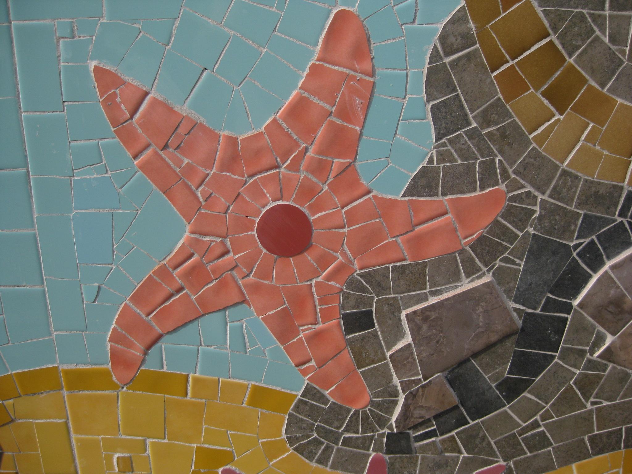 starfish brandling .jpg