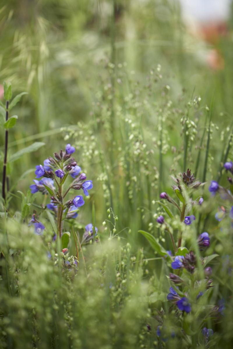 Colm Joseph RHS Chelsea perennial meadow style planting modern garden design.jpg