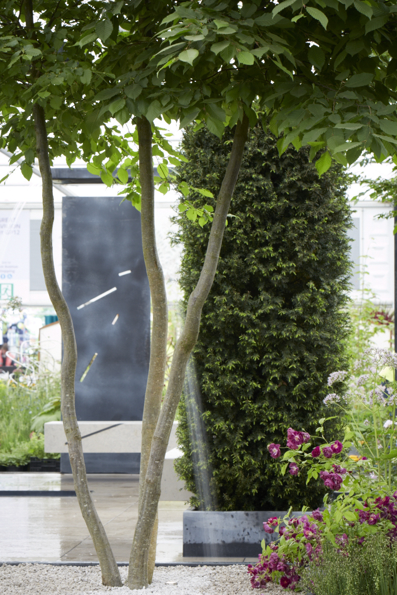 Colm Joseph RHS Chelsea multi-stem tree contemporary garden design.jpg