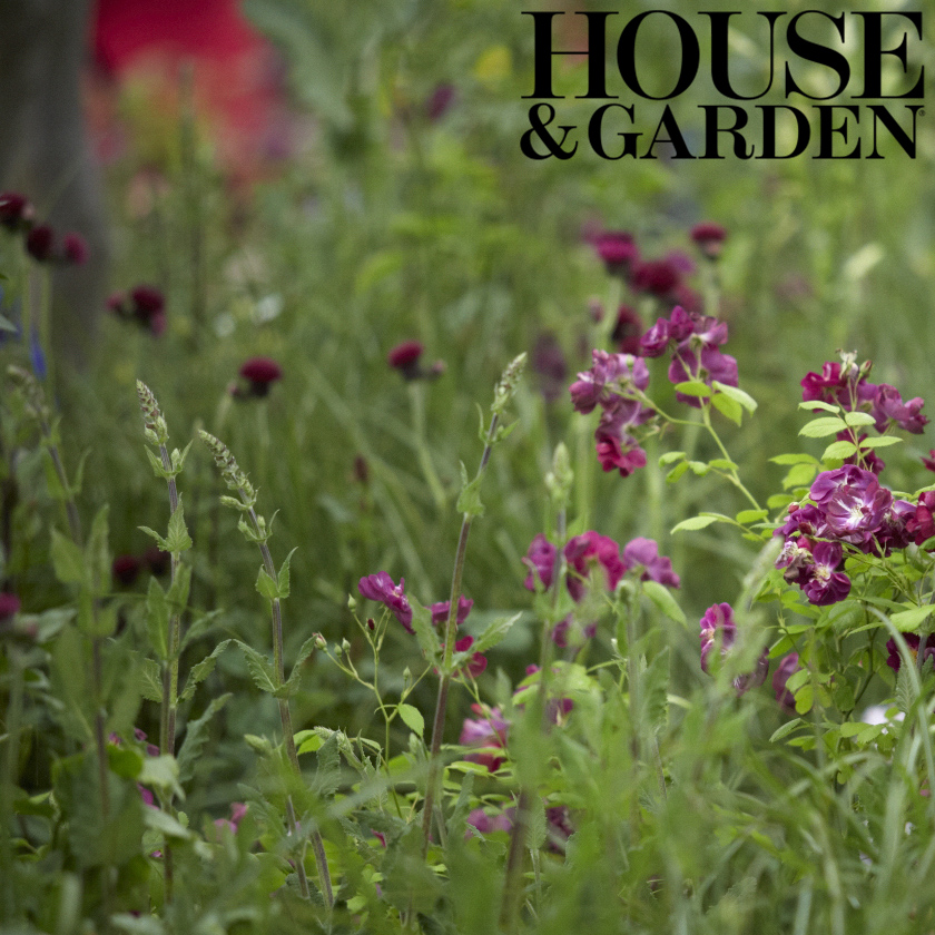 Colm Joseph Gardens RHS Chelsea award-winning garden design rose meadow House & Gardens.jpg