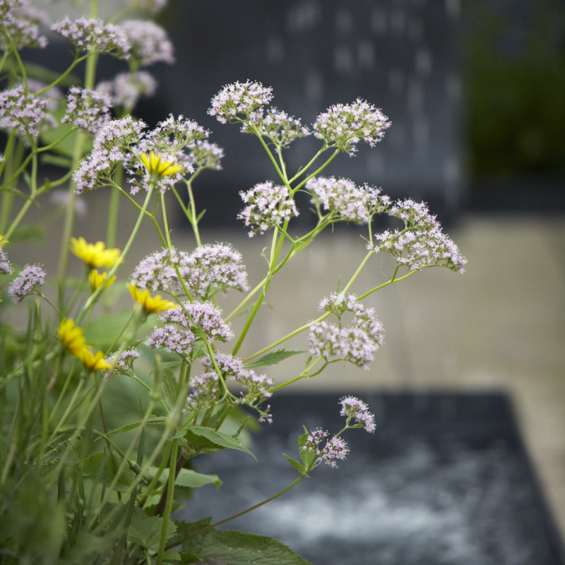 Colm Joseph RHS Chelsea modern fountain valeriana garden design.jpg