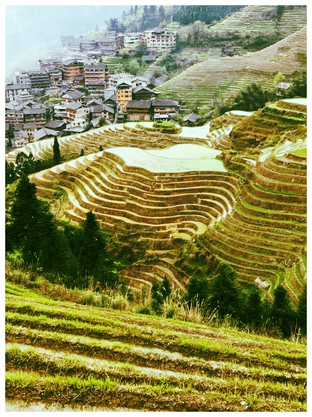 Longji Terraced Fields  Picturesque! China's landscape is mind blowing. Here we walked from the viewpoint called Nine Dragons and Five Tigers (higher elevation) down to Seven Stars around the Moon point surrounding the Ping'an Village then down into the village (1 1/2 hour hike).  It felt sacred to walk along paths that are over 650 years old. The weather was mild with a few sprinkles. The rice fields were void of rice, but still green and beautiful. Rice season is from May to October with the right before harvest being the best time to visit these fields in all their glory.