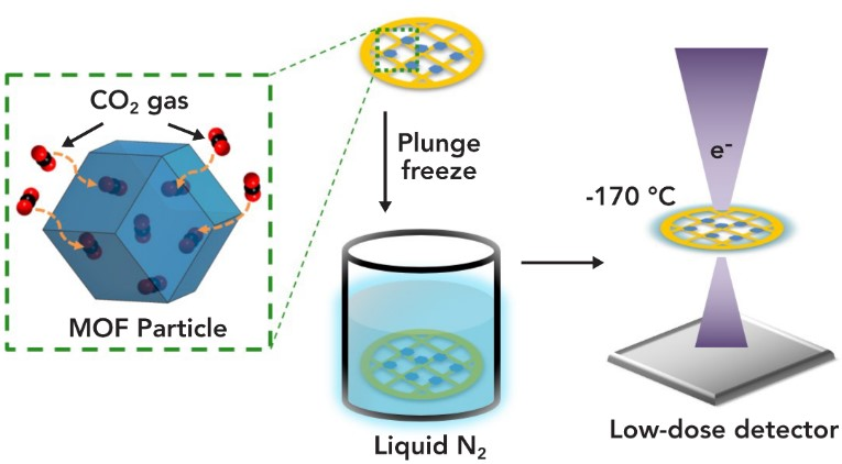 In a new study, researchers trapped carbon dioxide molecules in highly porous nanoparticles called MOFs, flash-froze the particles in liquid nitrogen and examined them with cryo-EM at a Stanford-SLAC facility. The process allowed them to obtain the first atomic-scale images of individual carbon dioxide molecules within the particle's cage-like pores. (Li et al., Matter, 26 June 2019)