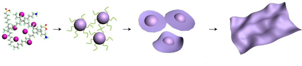 Schematic illustrating the growth of 3-D nanoparticles from a solution, and the 3-D nanoparticles transformation into 2-D nanosheets. Credit: Haimei Zheng/Berkeley Lab