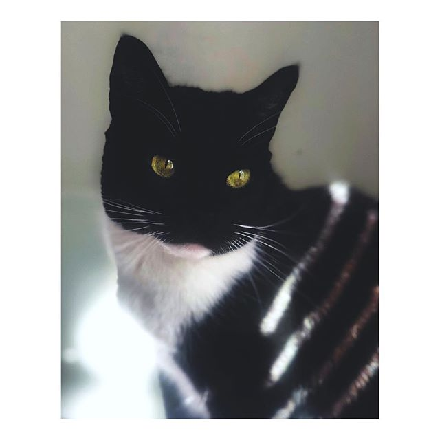Simon soaking striped sunlight. Atlanta, Georgia. February 25, 2019. #cat #catsofinstagram #catstagram #cats_of_instagram