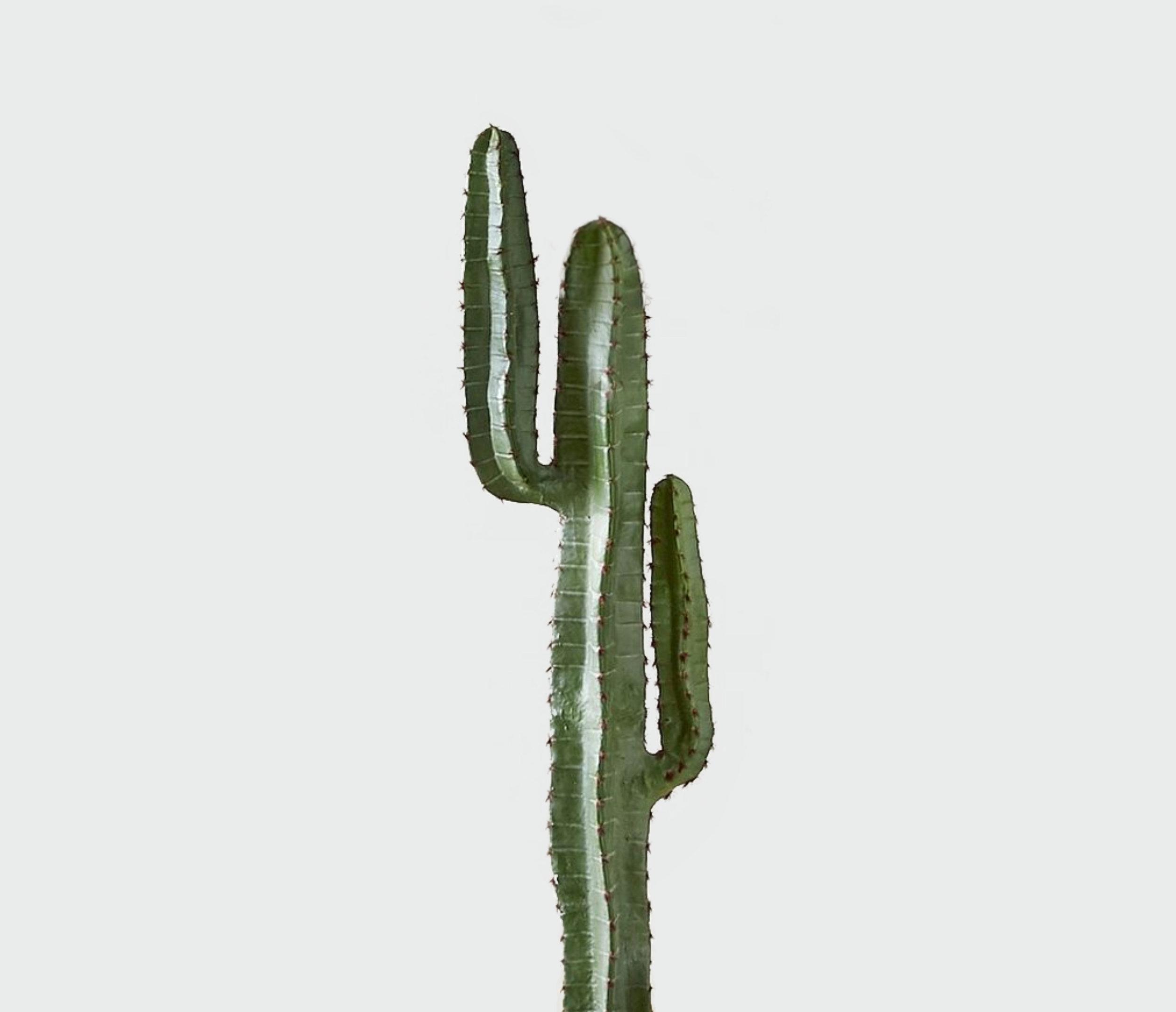 Desert Cauctus -