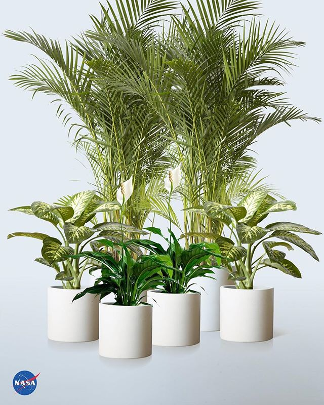 NASA carried out a 'Clean air study' to find out what plants purify the air from  harmful carcinogens and toxins. We've created a package tailored for the best performing plants. For a healthier home shop now. Link in bio