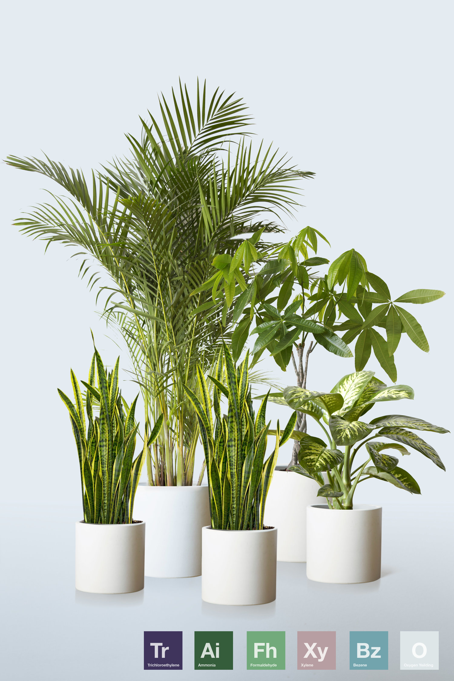 Sansevieria Plant Feng Shui the 1 bedroom kit save 14% — jack+ando