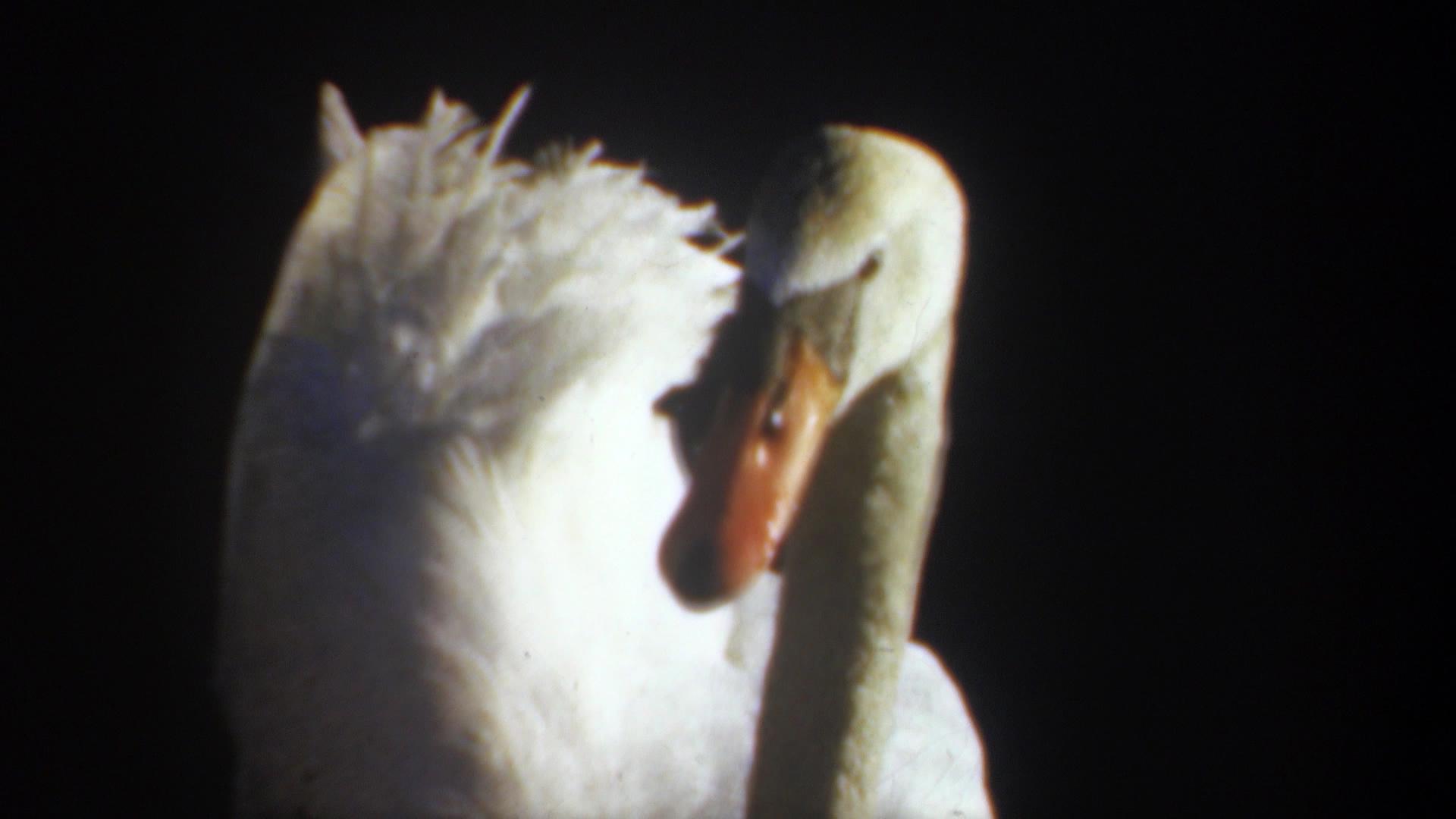 Anne Hollowday_Bird Watching_12.jpg