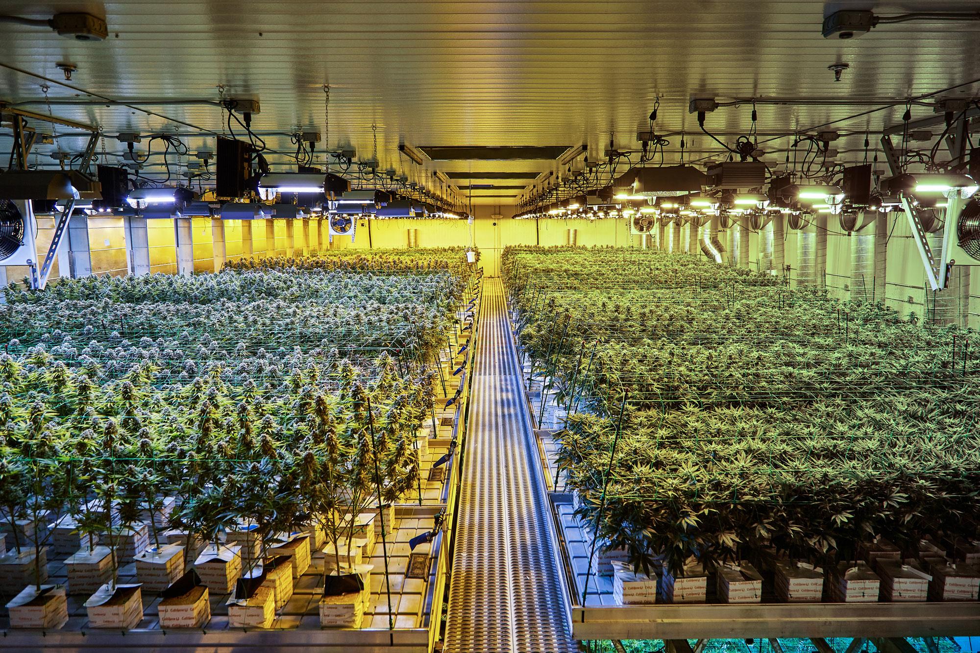 Cultivation_Harmony_Dispensary_Cannabis_Marijuana_02.jpg