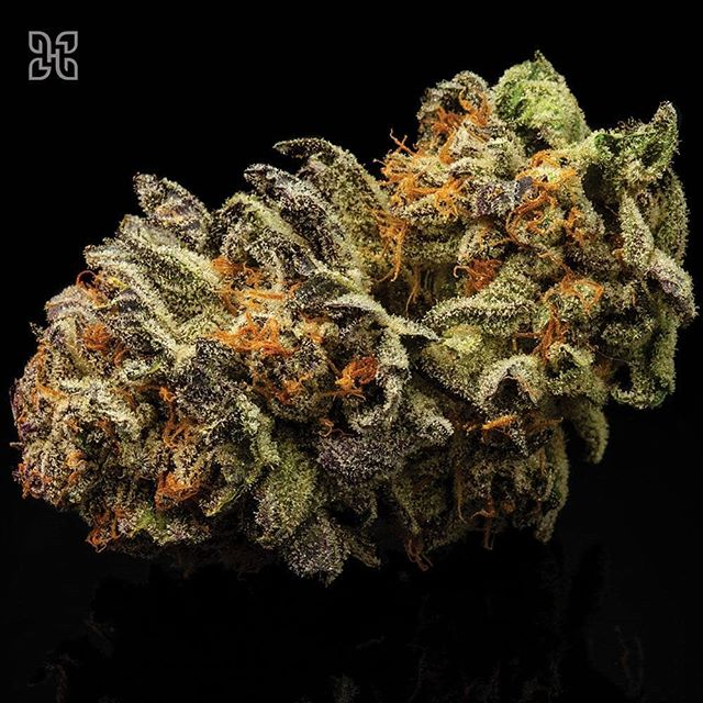 Purple Kush releasing today