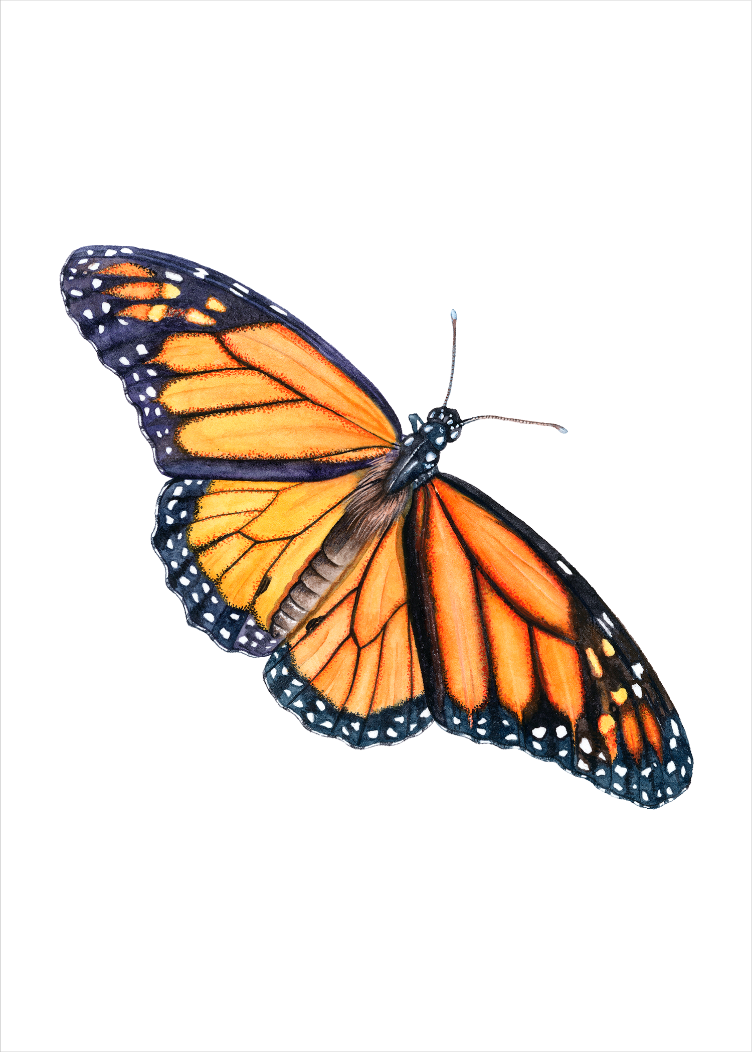 Dicamba Butterfly.png