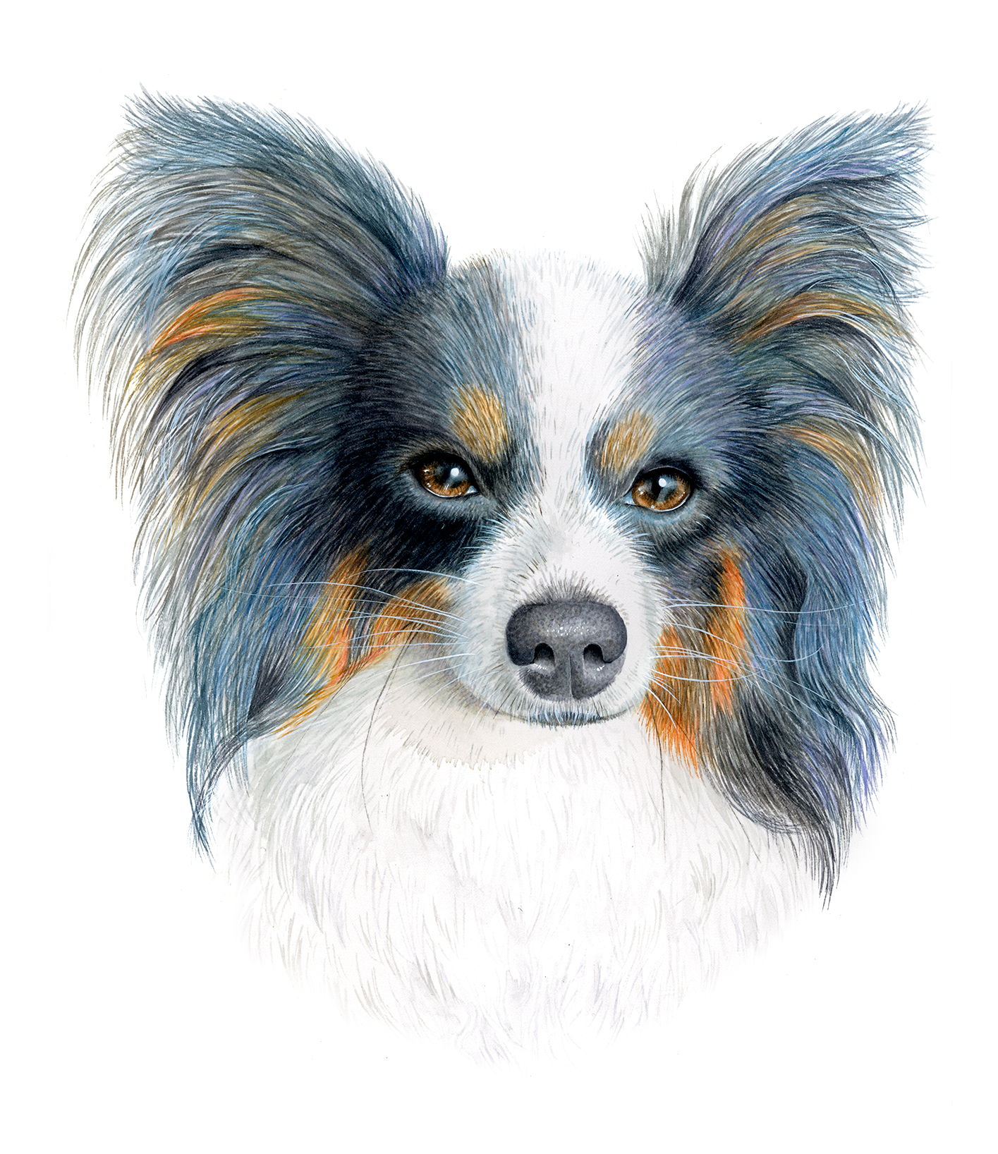 Pet Portraits in Watercolour