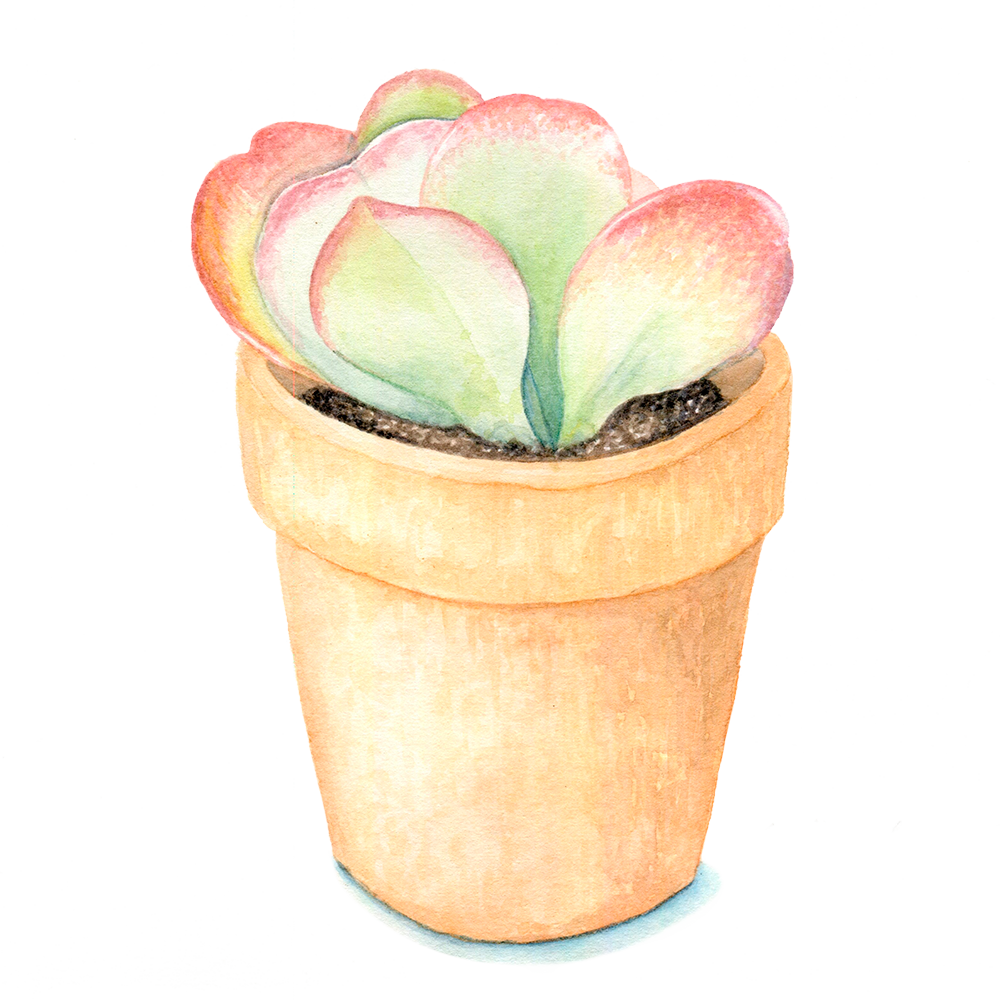 Flapjack Succulent.png