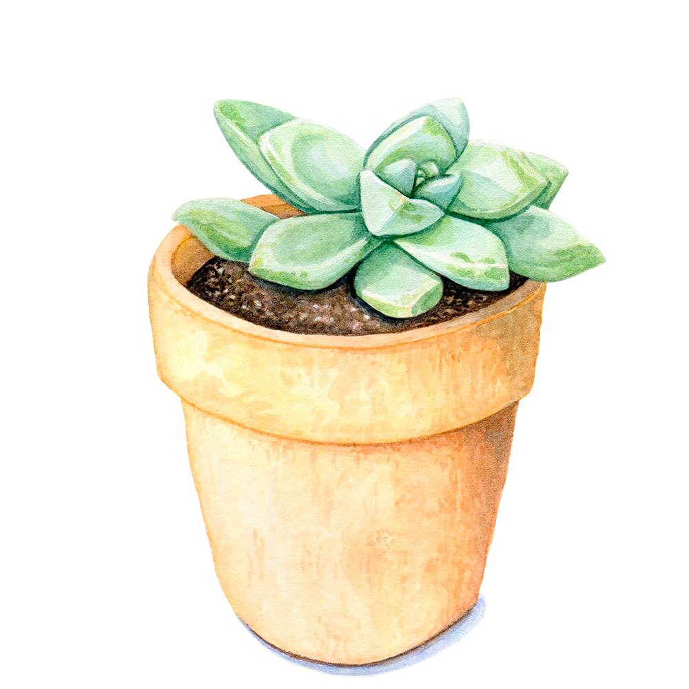 Succulent1.png