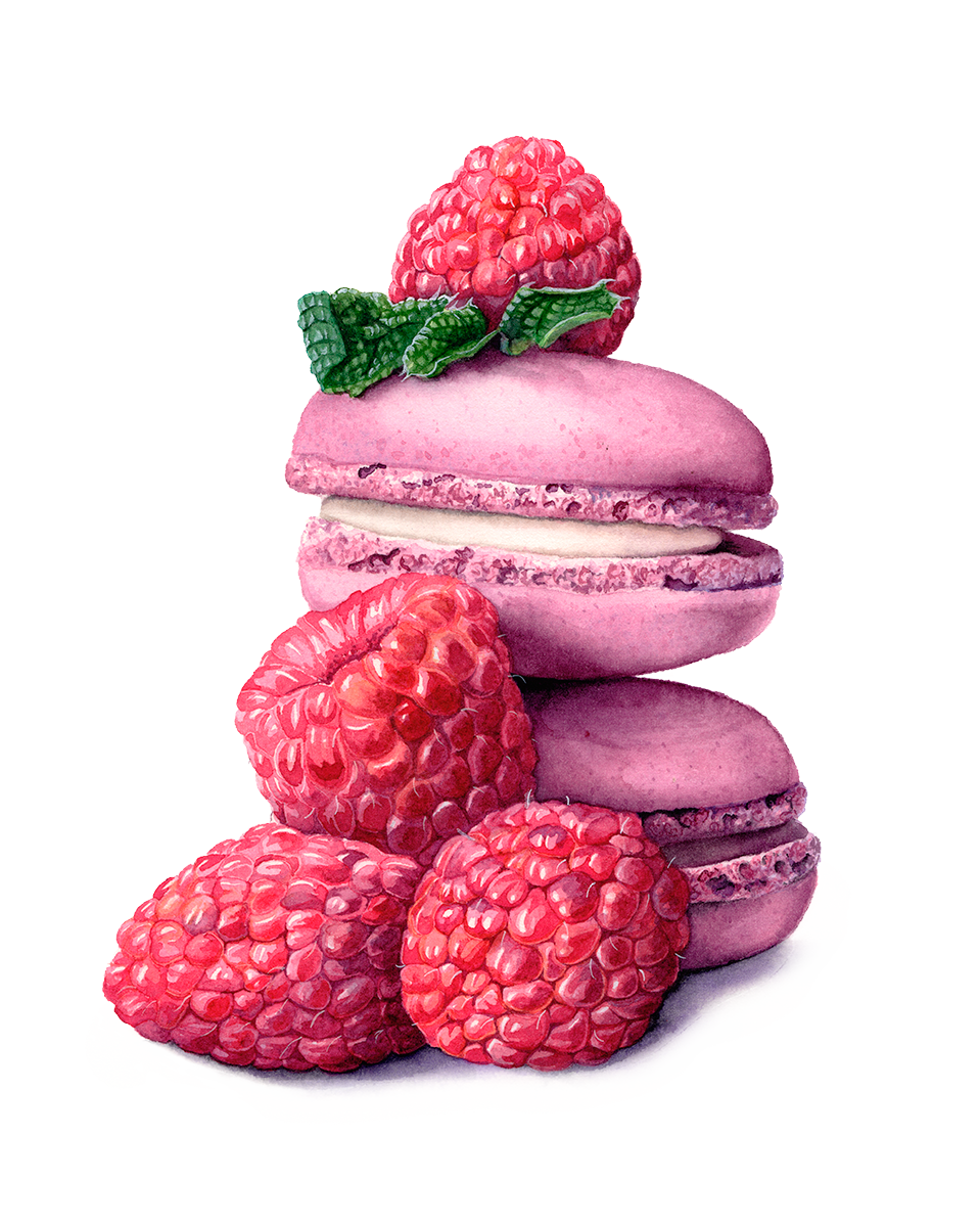 Watercolour Macarons by Katherine Appleby