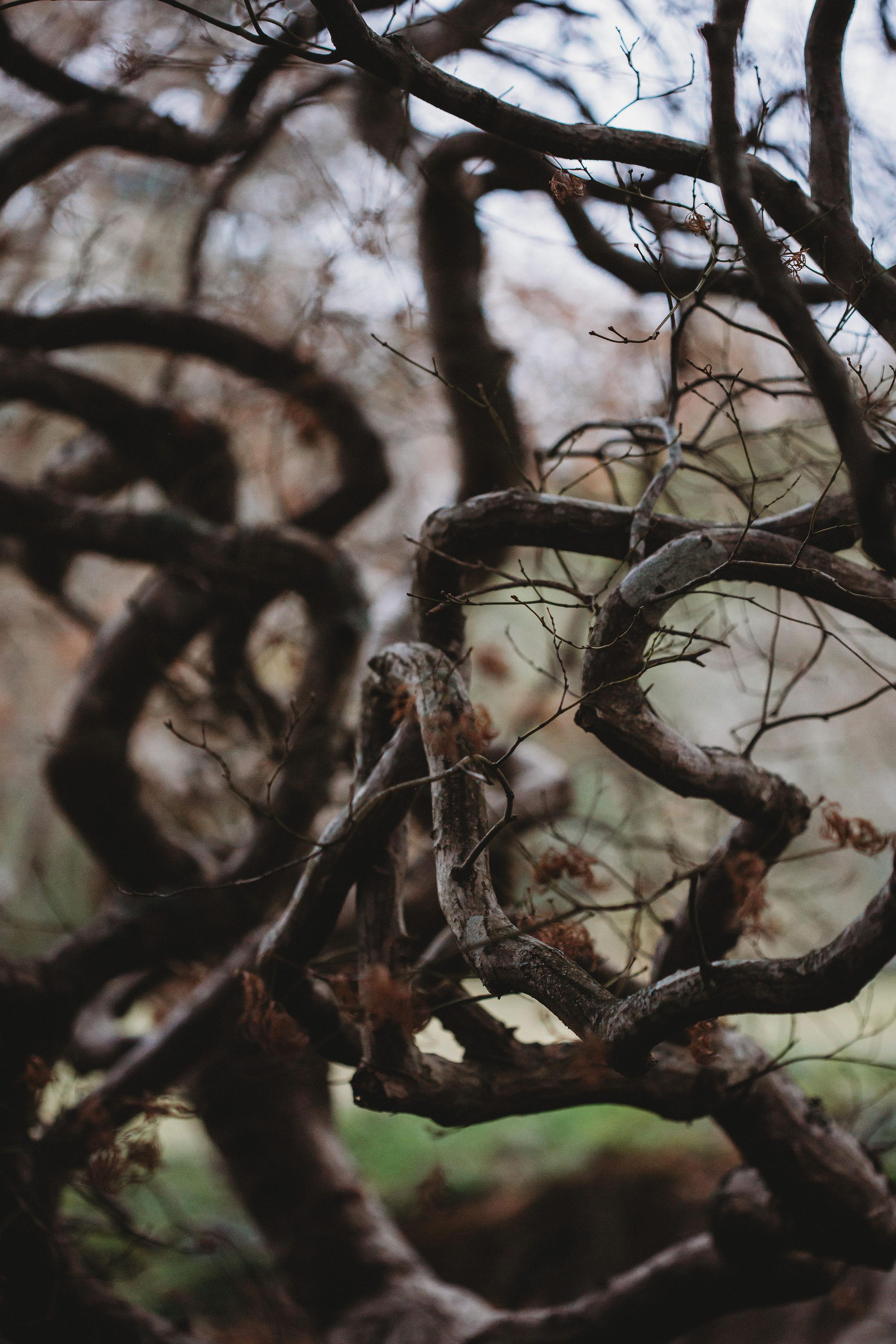 ALIANDDAMOWEDDING-BETHFERNLEYPHOTOGRAPHY-90.jpg